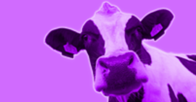 Purple Cow -  Just how remarkable is Evolve