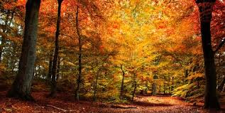 Autumn Discount -  Call Evolve